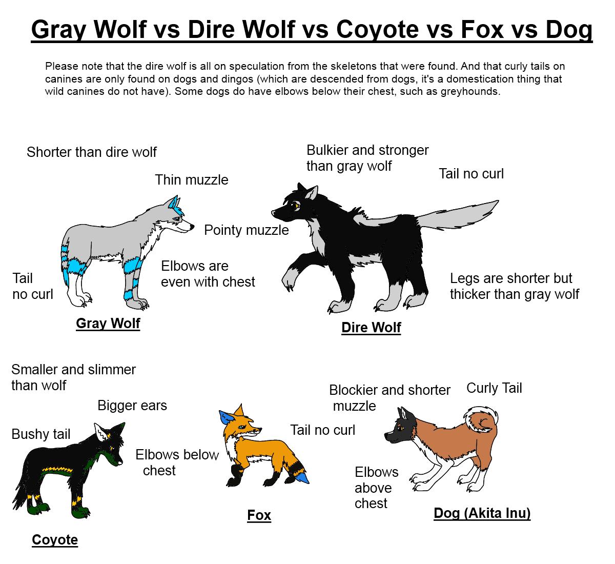 Dire wolf vs wolf - photo#27